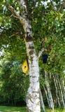 Brzozy drzewo i birdhouses Obrazy Royalty Free