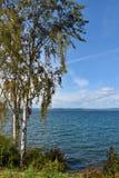 Brzozy drzewo przy jeziorem obrazy royalty free