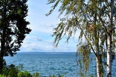 Brzozy drzewo przy jeziorem zdjęcie stock