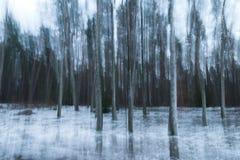 Brzozy drzewo w ruchu fotografia stock
