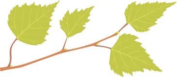 Brzozy gałąź z zielonymi liśćmi Zdjęcia Royalty Free