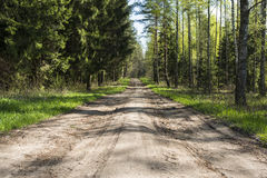 brzozy gaju drogi drewna Zdjęcie Stock