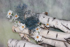 Brzozy i chamomile kwiaty Zdjęcia Royalty Free