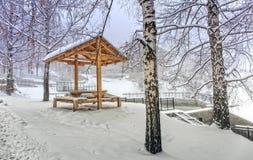 Brzozy i śnieg Obrazy Stock