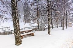 Brzozy i śnieg Fotografia Royalty Free