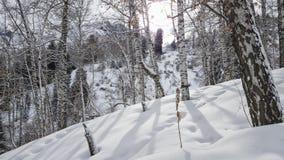 Brzozy i śnieg Obrazy Royalty Free