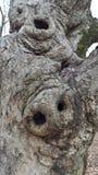Brzydki drzewo Zdjęcia Royalty Free