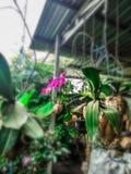 Brzydki kwiat obrazy royalty free
