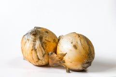 Brzydkie cebule zamykają w górę i odizolowywają w bielu zdjęcia royalty free