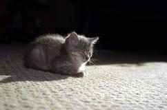 Bsay kitty. Reating kitty stock photo
