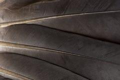 Bsckground de plumes images libres de droits