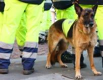 Búsqueda y perro del rescate Foto de archivo libre de regalías