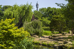 BT Tower and Japanese Island Garden in Regents Park Royalty Free Stock Photo