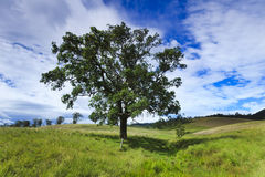 Btop Tree Meadow Hor Stock Photos
