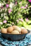 Btown eggs Royalty Free Stock Photo