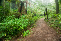 Buçaco forest Royalty Free Stock Photos