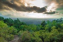 Buçaco-Wald Portugal Lizenzfreies Stockbild
