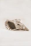 Buñuelos con el fondo blanco Fotografía de archivo libre de regalías