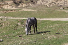Bułgarski koń Fotografia Stock