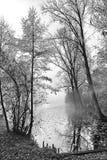 Bu van bomen het water Royalty-vrije Stock Afbeeldingen