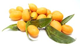 Buah Kundang ,Mango Plum / Mini Mango. On White Back Ground Stock Image