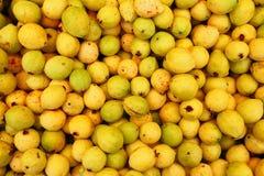Buayaba o guayabilla fruit  guajava Stock Photo