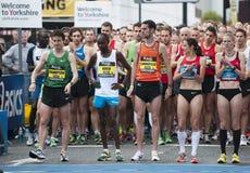 Buba großer Yorkshire Lack-Läufer 2011 Stockfotografie