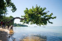 Bubaque, Guinea Bissau - December 07, 2013: Tree growing over ocean at beach of Bijagos island Bubaque, Guinea Bissau. Bubaque, Guinea Bissau - December 07, 2013 royalty free stock photography