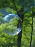 Bubbla i naturen Arkivfoto