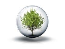 Bubbla med ett träd Royaltyfri Bild