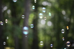 Bubblaskog - abstrakt begreppdrömmar av fredrenhet och lugn royaltyfria foton