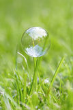 A bubble on a blade of grass Royalty Free Stock Photography