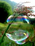 Bubble. Carpatians. Bubble on the herb Royalty Free Stock Photos