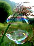 Bubble Royalty Free Stock Photos