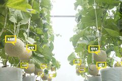 The bubble chat data the detect by futuristic technology in smart agriculture. With artificial intelligence to improving yield, efficiency, and profitability in royalty free stock photography