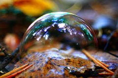Bubble on dry autumn leaves Royalty Free Stock Images
