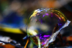 Bubble on dry autumn leaves Royalty Free Stock Photo