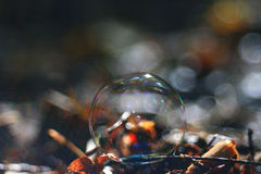 Bubble on dry autumn leaves Royalty Free Stock Image