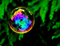 Bubble in the air. Soap bubble in between plants look colorful and gives reflection of sky stock images