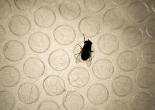 Bubble fly. A fly silhouette over a backlit bubble wrap sheet Royalty Free Stock Images