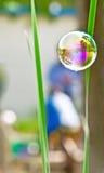Bubble flying between plants Stock Photos