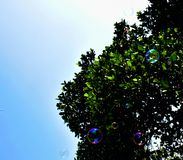 Bubble in front of a tree Royalty Free Stock Image