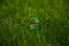 Bubble at grass. Small colorful bubble  at very green fresh grass Royalty Free Stock Photo