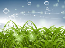 Bubble and green grass Stock Photo
