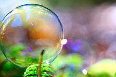 bubble among green plant in forest Royalty Free Stock Photography