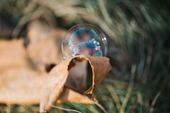 Bubble on leaf Royalty Free Stock Image