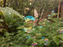 A bubble on a plant royalty free stock photo