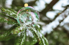A bubble sitting on a fir-tree. Branch Royalty Free Stock Images