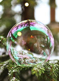 A bubble sitting on a fir-tree. Branch Stock Images
