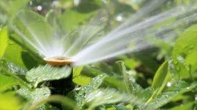 Bubbler άρδευσης κήπων απόθεμα βίντεο